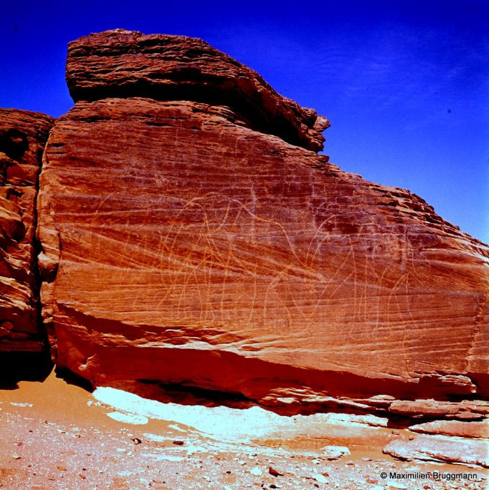 81-82 Drigana. Région du Djado. — Sur un rocher bordant un reg, autrefois terrain propice au parcours des éléphants, cette superbe fresque néolithique de 4 éléphants naturalistes. Le rocher mesure 4,25 m de large. Dans la même position, face au reg ténéréen, et à 300 m des premiers, trois autres éléphants de même style. Largeur du rocher support : 4,10 m.