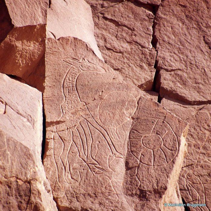 150 Oued Mathendous. In Habeter III. — Epoque du « bubale Grande girafe d'allure massive mais à l'ana¬tomie précise. Gravure au trait profond et régulier. En bas, une autruche très schématique et peut-être postérieure. Sa tête supposée est contiguë à une représensation de piège. Le cercle du dessus est, peut-être, une figuration de méduse. Le « piège » a 0,63 m de diamètre.