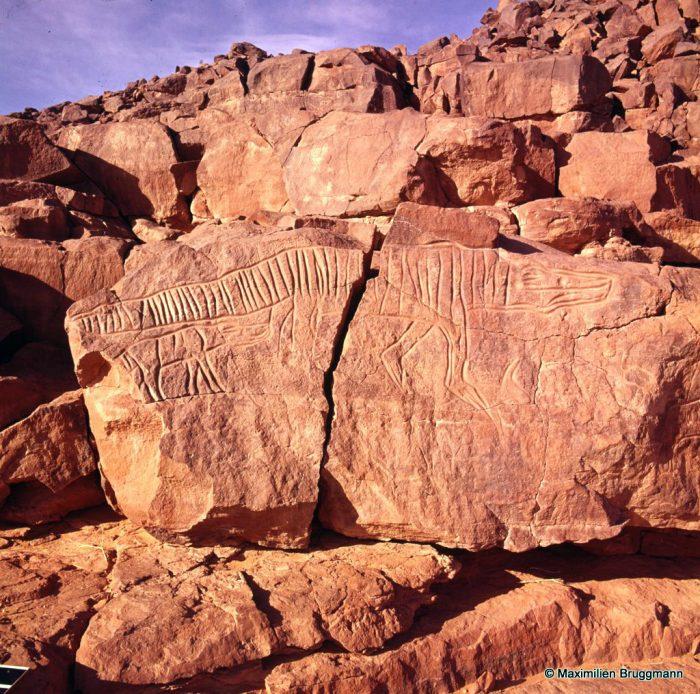 152 Oued Mathendous. In Habeter III. — Epoque du « bubale ». Le célèbre crocodile suité qui fait 2,25 m de longueur ! Le rendu des plaques dermiques a été réalisé au trait. Noter en haut à droite les inscriptions en tifinars.