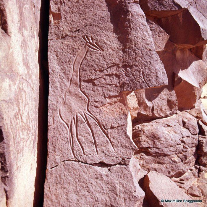 198 Oued Mathendous. In Habeter III. — Girafe gravée au trait profond et à tête très stylisée, évoquant ce que sera le style du peintre Chirico. Hauteur de la bête : 1,30 m.