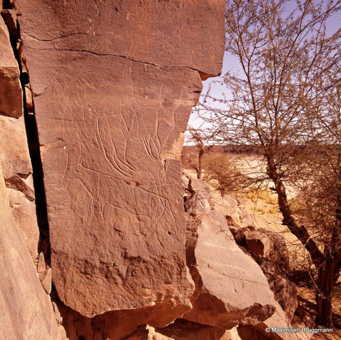 159 Oued Mathendous. In Habeter III. — Deux girafes et deux bovidés gravés sur une surface verti¬cale rocheuse, en bordure de l'Oued. Des pattes les plus basses du grand bovidé à la tête des girafes : 1,32 m.