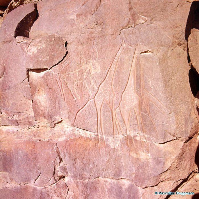 140 Oued Mathendous. In Habeter III. — Girafes gravées à trait continu, régulier et profond. Epoque bubaline. Une girafe plus petite et inachevée les précède à droite. En haut, à gauche : bovidé récent piqueté.