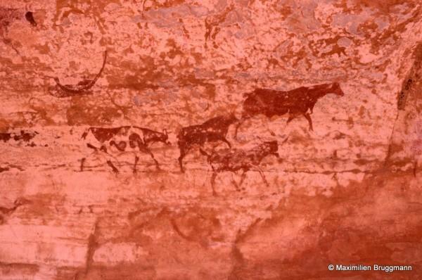 435 Jabbaren (Tassili-n'Ajjer). — Bovidés allant vers la droite. Belle peinture polychrome mettant en relief la précision anatomique, ce qui donne à l'observateur le sentiment d'être réellement en présence d'une scène pastorale. En haut à gauche, structure en « croissant effilé » déjà notée ailleurs : se reporter à la photo 403 du site de Jabbaren.