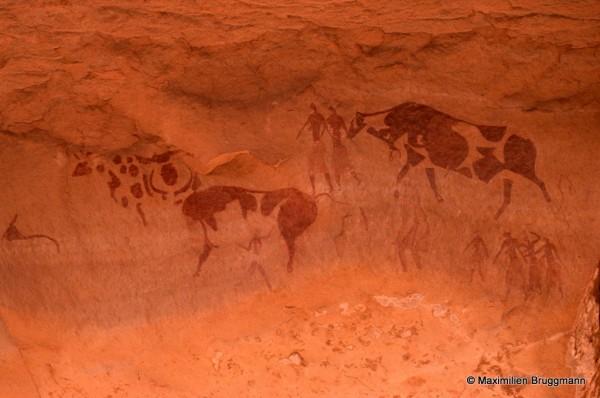 437 Jabbaren (Tassili-n'Ajjer). — Très beau document montrant bien l'exploitation des parois d'un abri sous roche. Son sol constitue la suite de celui de l'abri voisin. Le grand troupeau de bovidés est caractéris¬tique des belles peintures polychromes de l'époque pastorale et permet de constater l'homogénéité d'une espèce bovine aux robes multiples. Largeur de la dalle représentée : 1,20 m.