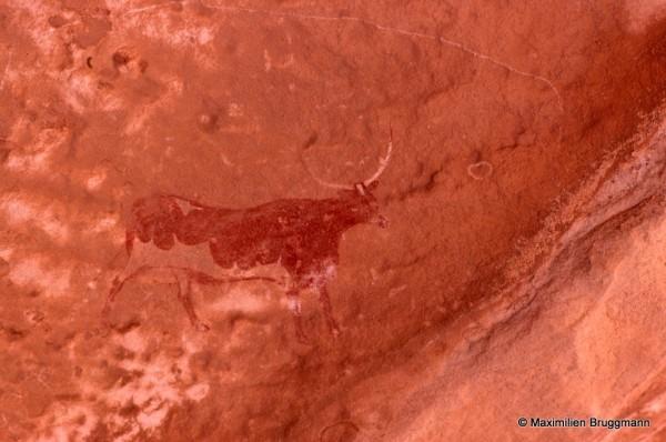 466 Ozeneare (Tassili-n'Ajjer). — Grande vache peinte, bicolore, dont les cornes sont blanches. Elle figure sur une paroi d'abri. Du sabot arrière à l'aplomb de la corne avant : 0,21 m.