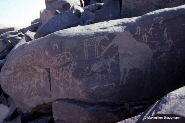 51 Tanakom (Aïr). — Eléphant piqueté, étranges animaux schématiques. Noter les trois personnages stylisés. Hauteur de l'éléphant : 0,45 m.