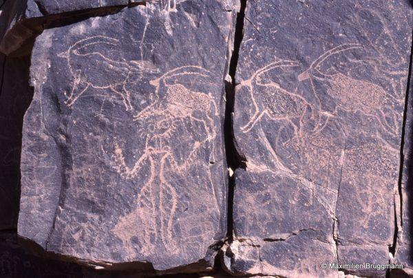 55 Anakom (Air). — Les oryx au galop tranchent sur de nombreux graffiti. Le petit cheval, près d'un homme armé de la lance et du bouclier, est également gravé par un familier du milieu équidien. A droite, en bas, un homme à la tête en U renversé. Bien qu'il soit du même type que le précédent, le personnage de gauche (0,75 m de hauteur) a une tête « en soleil ».