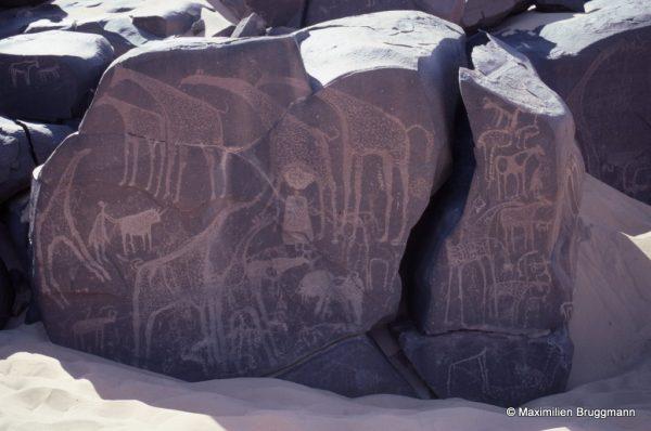 45 Tanakom (Aïr). — De la même époque : girafes, autruche, berger touchant un bovidé. Les graveurs se sont intéressés à toutes les surfaces lisses.