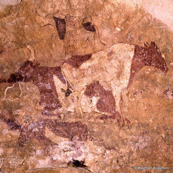 214 Tadrart Acacous. Ouan Amil. — Dans le même style que la vache précédente, une vache debout devant une autre couchée. Au-dessus, une troisième avec un « bât » sur le dos. Les tons de la robe sont rendus par des plages rouges et blanches. Du museau de la vache couchée au museau de la vache debout : 0,47 m.