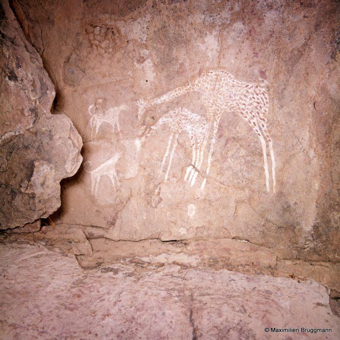 234 Tadrart Acacous. Teshouinat-Tagzelt. Girafe suitée faisant face à deux chiens aboyant, qui peuvent être des sloughis. Largeur du panneau représenté: 0,43 m. La peinture est de même technique que celle utilisée pour la girafe de la photo 231.