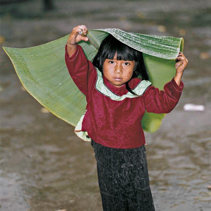 Fillette à la feuille. La région du Loreto, au nord-est du Pérou est l'une des régions les plus humides et les moins peuplées du pays. Cette simple feuille de bananier, prélevée par une gamine Shipibo pour se protéger de la pluie tropicale, provient de la forêt amazonienne encore épargnée… mais pour combien de temps ?