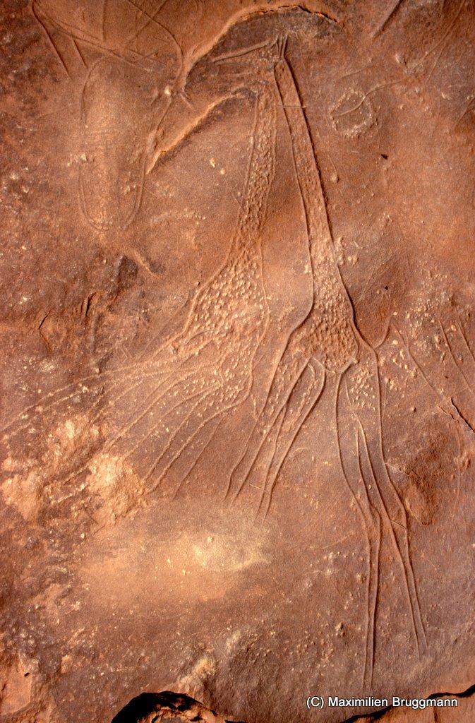 108 Enneri Blaka. Site 5. — Epoque du « bubale ». Deux très belles girafes dont les traits bien gravés soulignent l'élégance. Cette figuration et la précé¬dente (photo 107) se trouvent à-plat sur le sol de l'abri néolithique. En haut à gauche, des empreintes de sandales comme il en existe par milliers à traversle Sahara, à Tiratimine (Hoggar) en particulier. Il s'agit d'un voeu amoureux propre aux touaregs. Des cornillons à la base des pattes : 0,95 m.