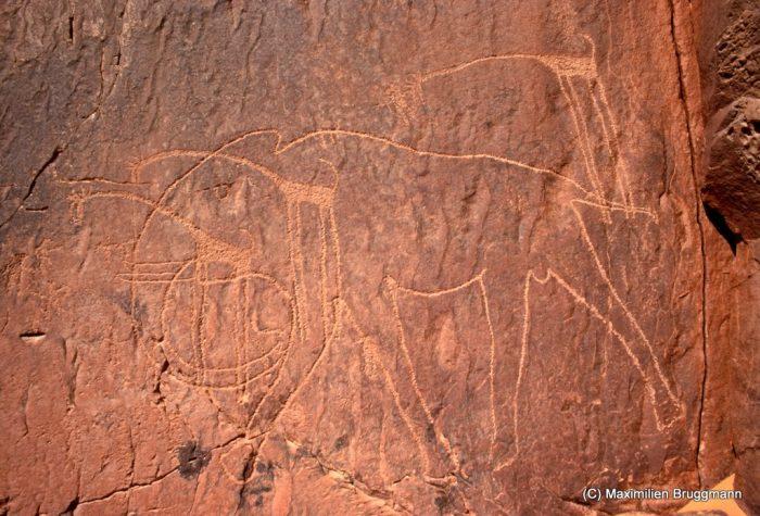 105 Enneri Blaka. Site 4. — Grand éléphant natura¬liste. Epoque du « bubale ». La surcharge des trois girafes est très postérieure. Leur style est d'ailleurs schématique. Du bout des défenses de l'éléphant au bout de la queue : 1,80 m de long.