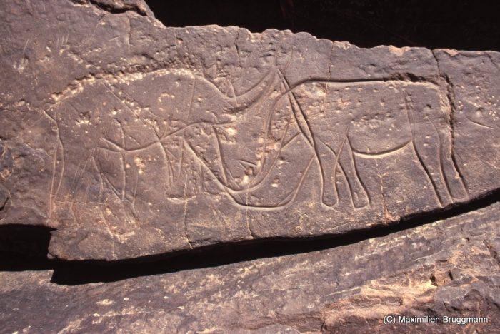 137 Confluent Blaka-Domo. Site 12. — Rhinocéros affrontés de l'époque bubaline. Bout d'une queue à l'autre : 0,665 m.