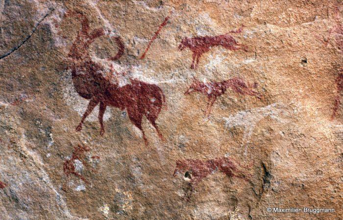 290 El Beridj (Tadrart). — A l'entrée de l'abri, scène de chasse au mouflon. Ce dernier est attaqué par trois chiens, deux rouges et un blanc, dont on ne peut dire si ce sont des sloughis. Du bout de la corne à la queue : 0,20 m.