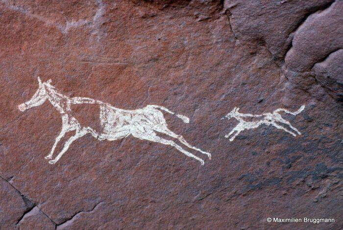292 El Beridj (Tadrart). — Biche-Robert (?) poursuivie par un chien (sloughi ?). Du museau de l'animal à la queue du chien : 0,55 m de longueur.