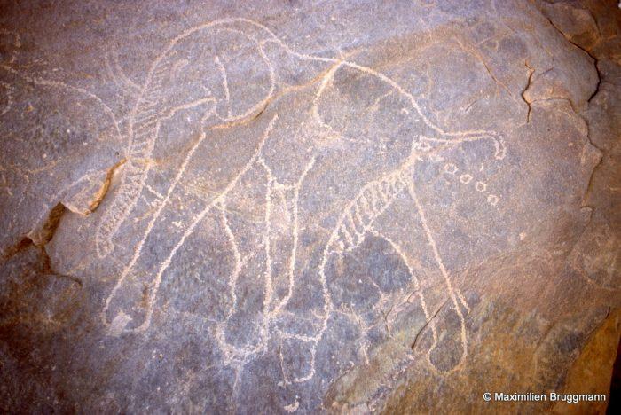 307 In Djaren (Tadrart). — Gravure peu profonde, réalisée par piquetage avec un remarquable souci de l'exactitude. L'éléphant est en train de déféquer