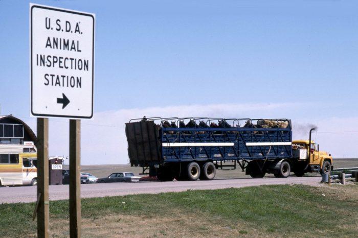 Attente rituelle à la frontère entre Canada et Etats-Unis, le temps de tatillons contrôles vétérinaires.